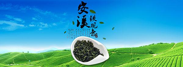 淘宝铁观音茶叶