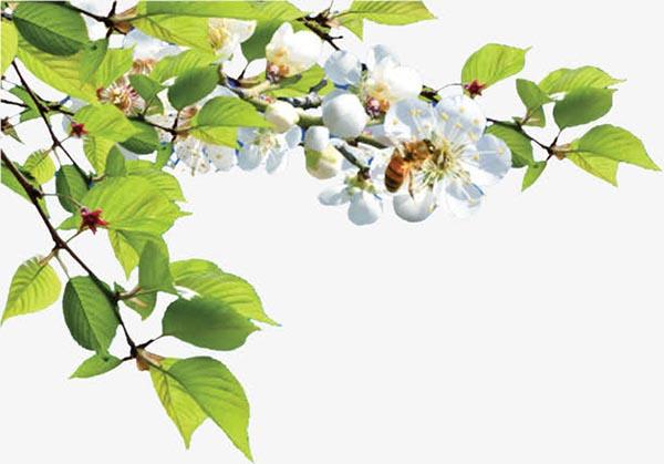 清新树叶花朵