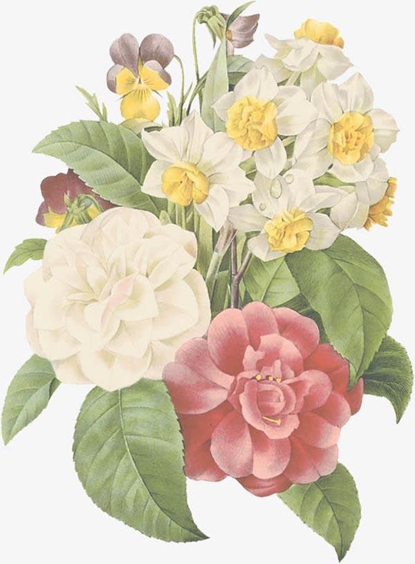 0 点 关键词: 手绘插画植物花朵,插画,植物,花朵,png 下载文件特别