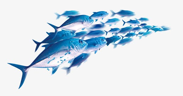 模糊卡通鱼群