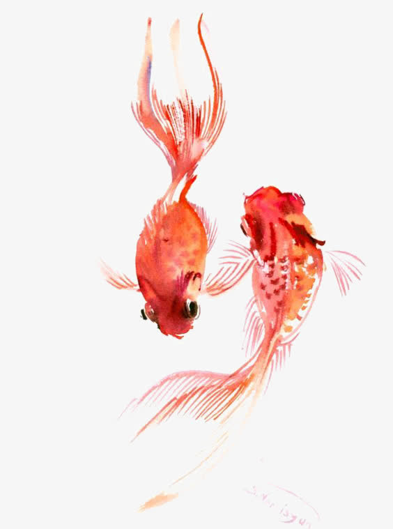 水彩金鱼 素材中国sccnn Com