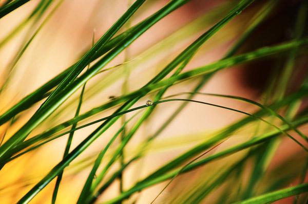 青草与露珠
