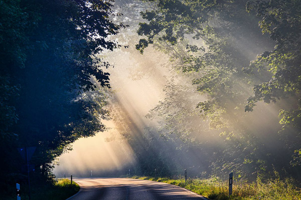 树林里的小路