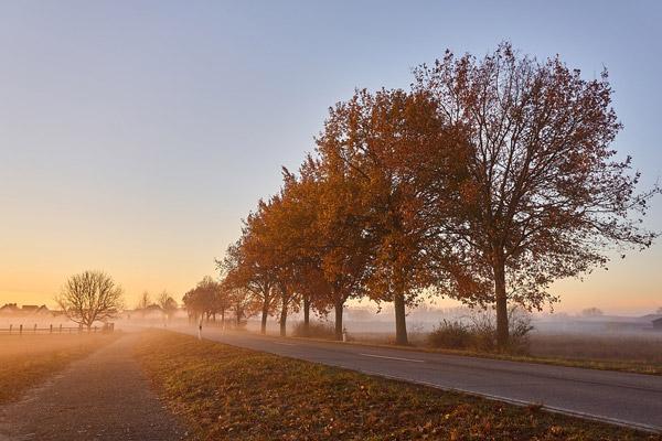 晨雾中小路