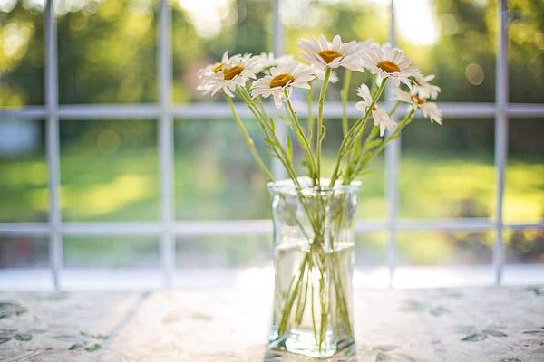 窗台雏菊插花