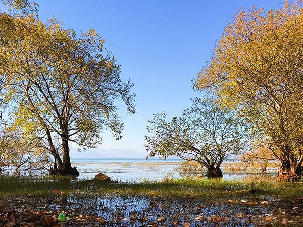 洱海沼泽图片