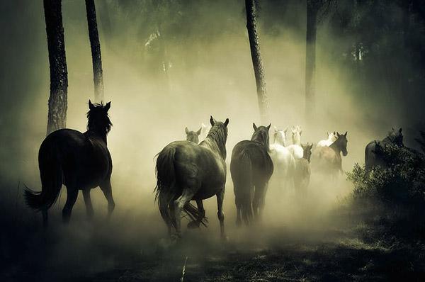 森林里奔跑的马