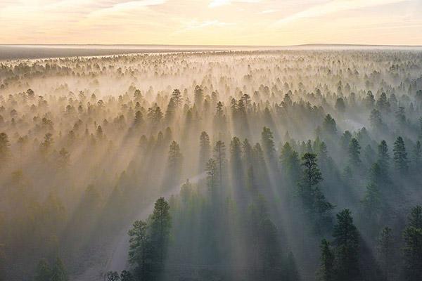 森林日出风景