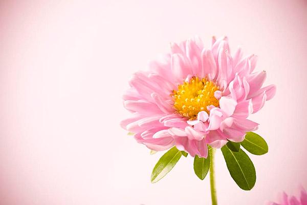 美丽花朵特写