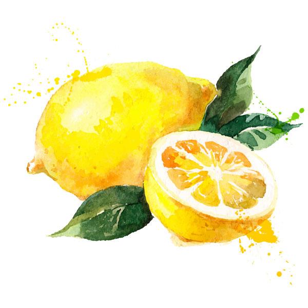 手绘水彩柠檬