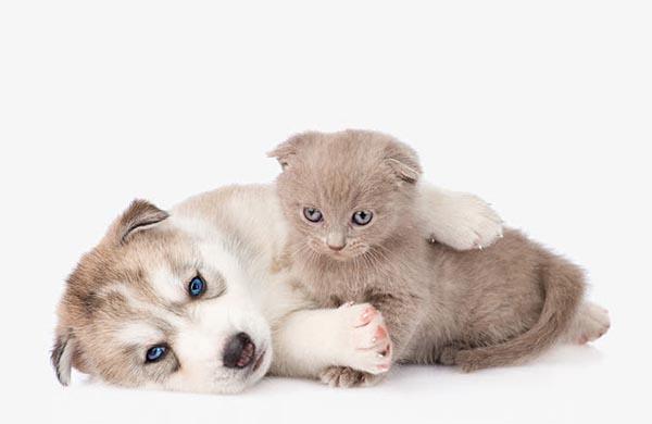 小狗与小猫