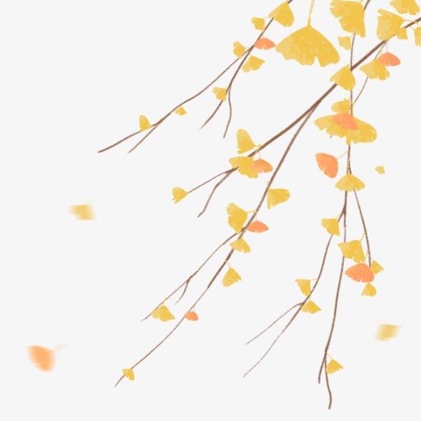秋天银杏树叶