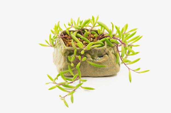小清新多肉植物