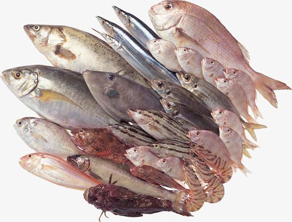 生鲜海鲜河鲜