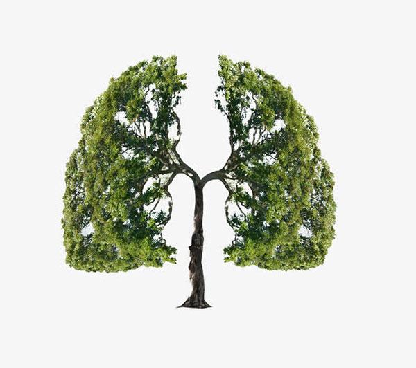 树木清新肺部