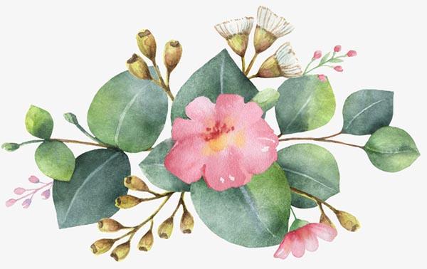 手绘果实花与叶
