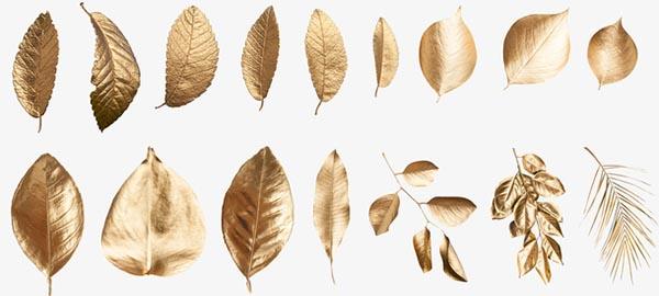 镀金色树叶叶子