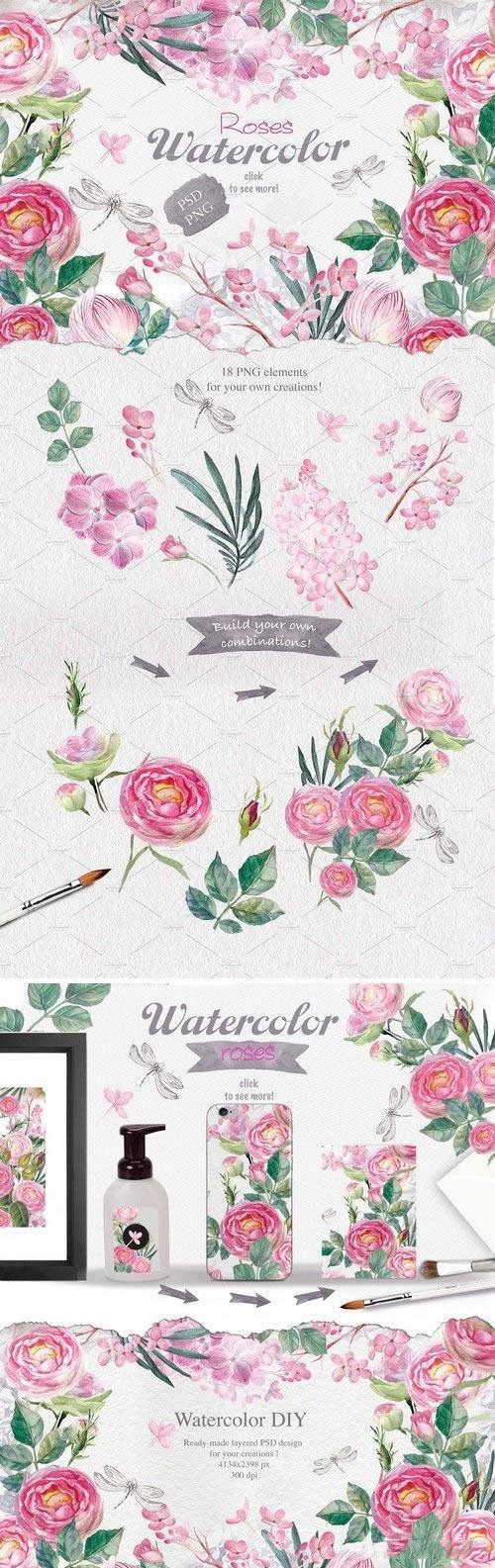 水彩玫瑰插图