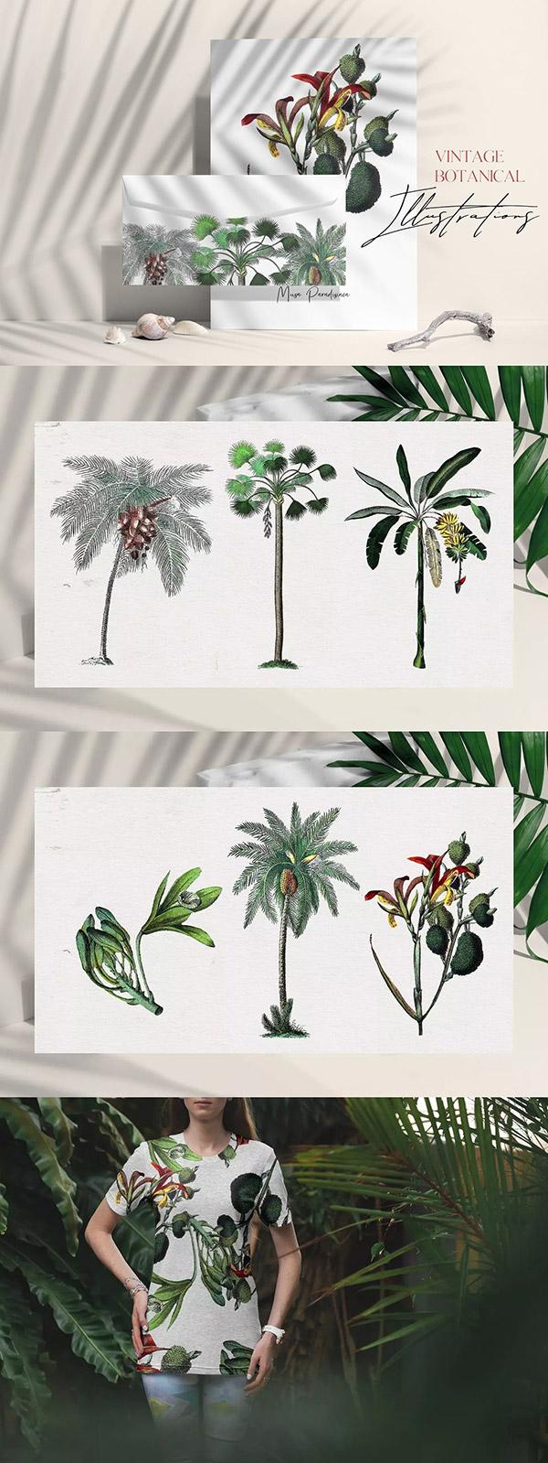复古风格热带植物插画