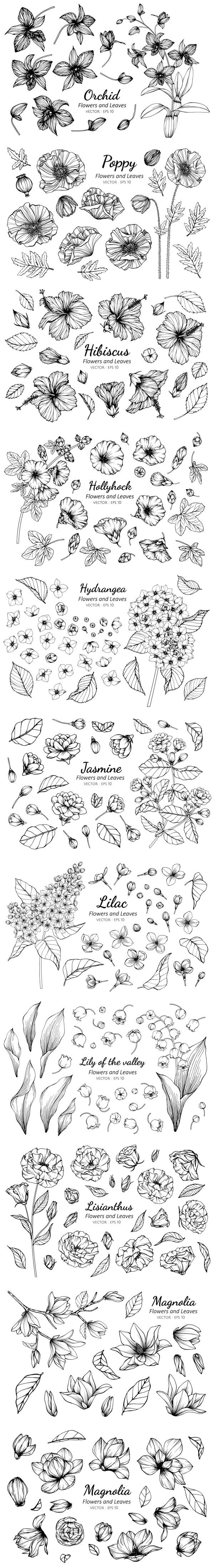 黑白素描植物插画