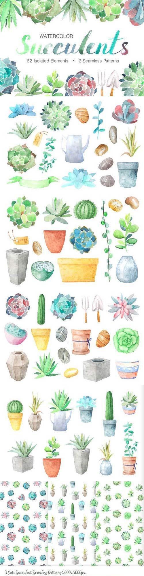 水彩多肉植物