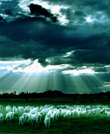 极致美景-草原