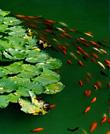 极致美景-池塘