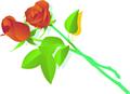 矢量玫瑰花_14