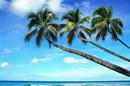 沙滩海滩_16