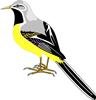 矢量鸟类_3
