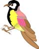 矢量鸟类_4