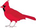 矢量鸟类_12