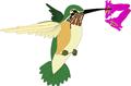 矢量鸟类_19