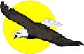矢量鸟类_23