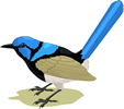 矢量鸟类_55