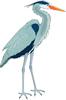 矢量鸟类_74