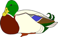 矢量鸟类_75