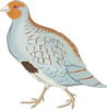 矢量鸟类_84