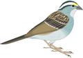 矢量鸟类_89