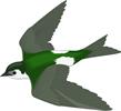 矢量鸟类_95