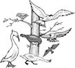 矢量鸟类_103