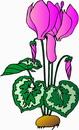 花朵鲜花_38
