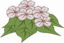 花朵鲜花_39