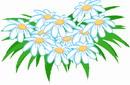 花朵鲜花_40
