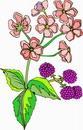 花朵鲜花_44