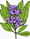 花朵鲜花_45