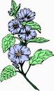 花朵鲜花_46