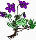 花朵鲜花_54