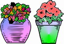 花朵鲜花_55