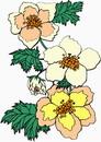 花朵鲜花_56